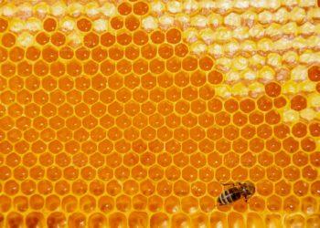 Honigwabe mit Biene