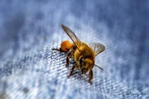 Pollenhösschen