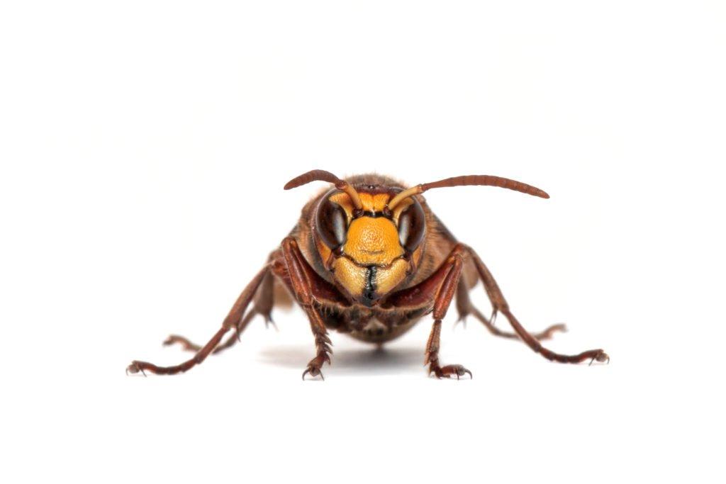 umsiedlungen imkerei habl tzel wespen hornissen bienen. Black Bedroom Furniture Sets. Home Design Ideas
