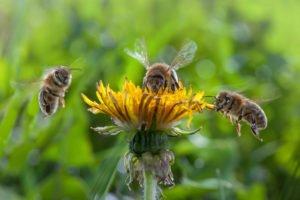 Bienen Galerie 2020