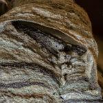 Hornissennest (Vespa crabro)