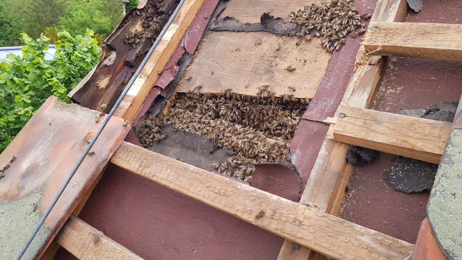 Tierrettung von Honigbienen