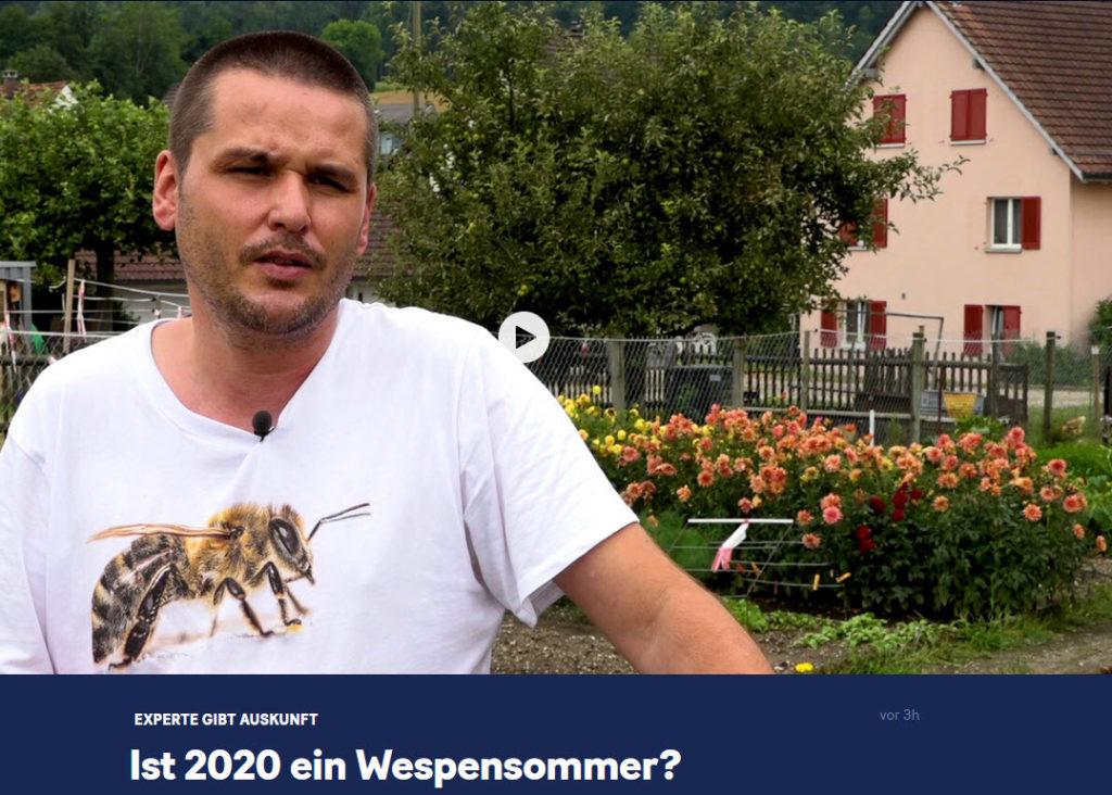 Ist 2020 ein Wespensommer? 20min 06.08.2020