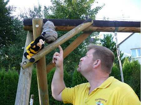 verhalten mit wespen