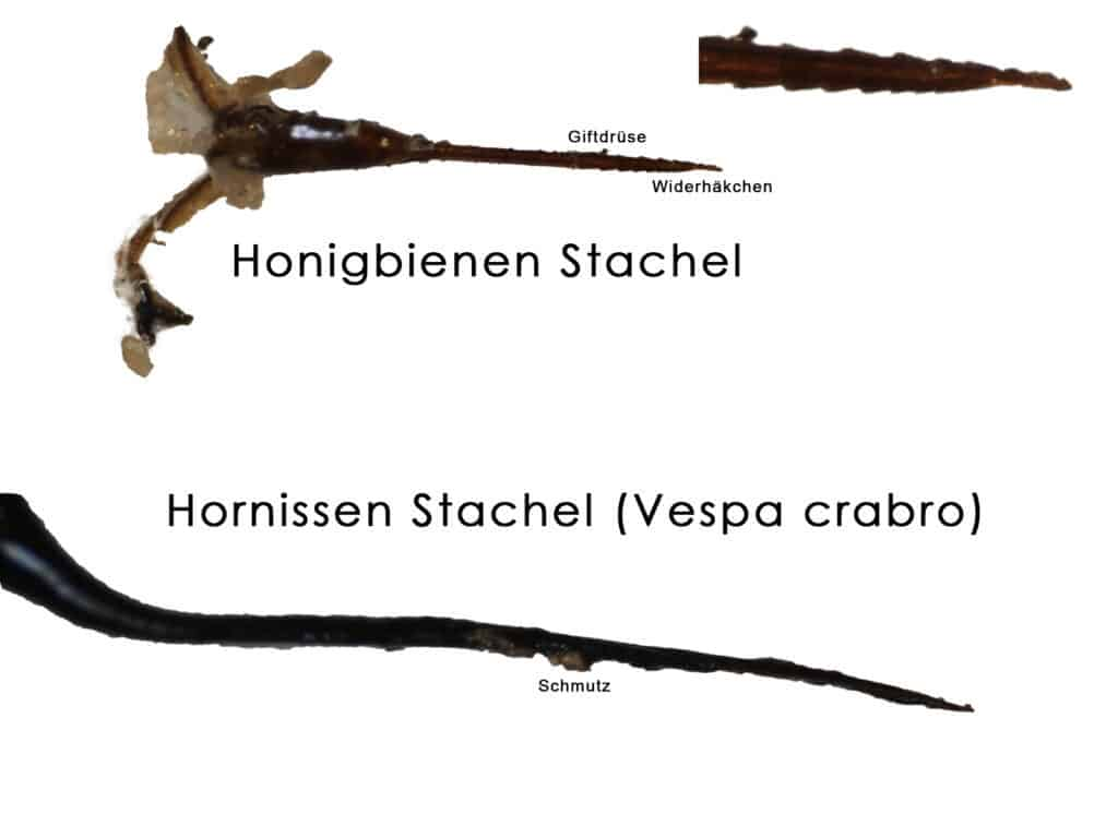 Stachelapparate