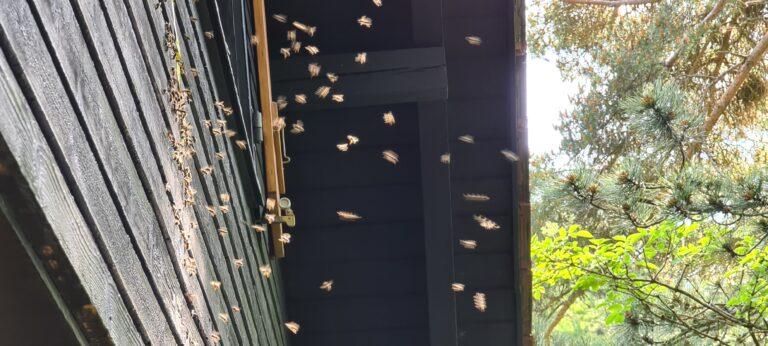 Bienenumsiedlung 2021084