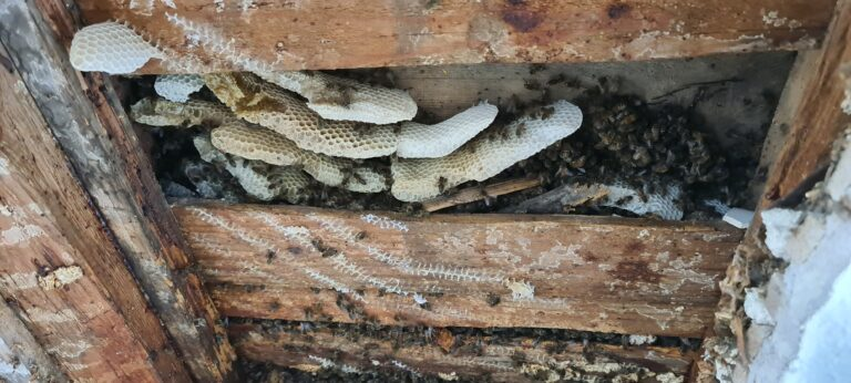 Bienen Umsiedlung 2021085