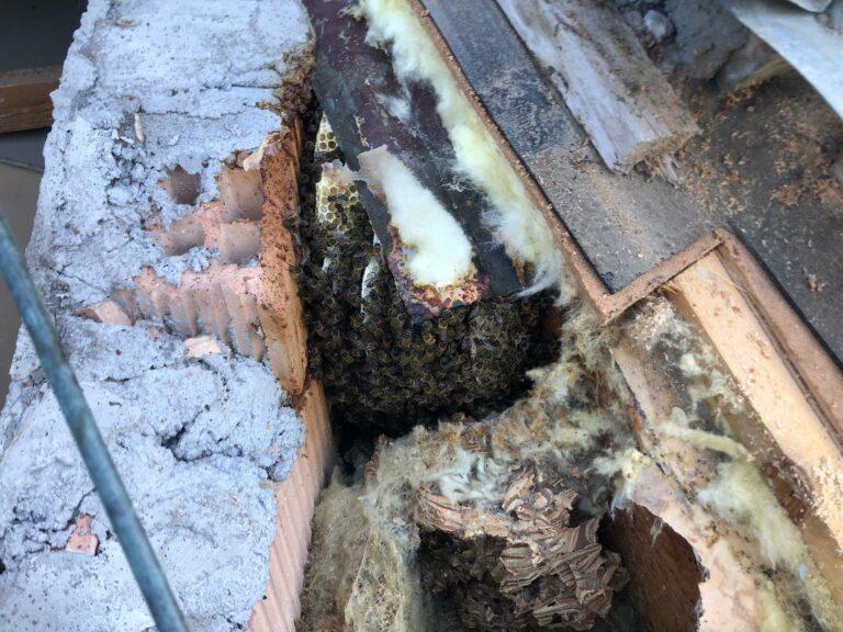 Einsatz Honigbienen Rettung 15. Juni 2021