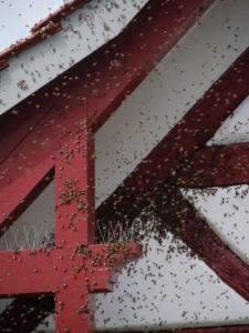 Bienen Umsiedlung 2021095